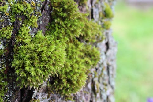 Free stock photo of moss, tree, tree bark