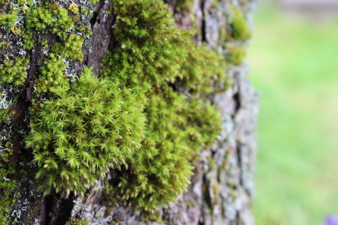 樹, 樹皮, 苔蘚 的 免費圖庫相片
