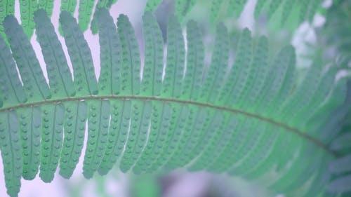 bitki, bitkiler, doğa içeren Ücretsiz stok fotoğraf