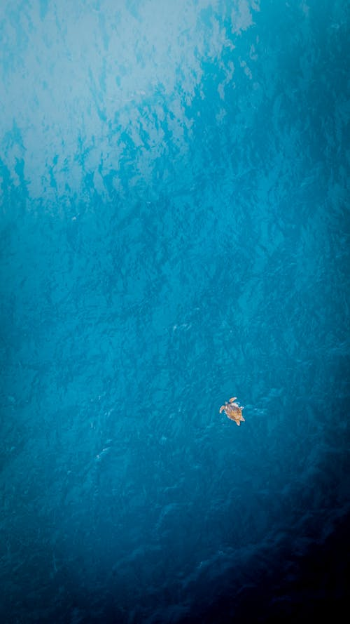 From above of distant small sea turtle swimming in endless turquoise sea with clear water in tropical resort in nature