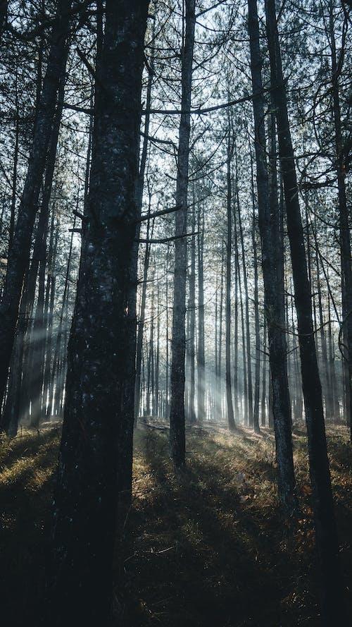 Fotos de stock gratuitas de al aire libre, alto, árbol
