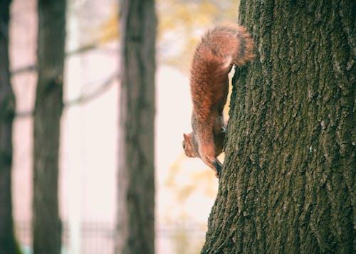 Immagine gratuita di alberi, ambiente, animale, arrampicarsi