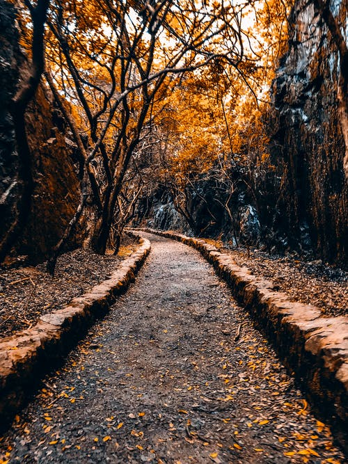 Free stock photo of adnveture in forest, adventure, autumn