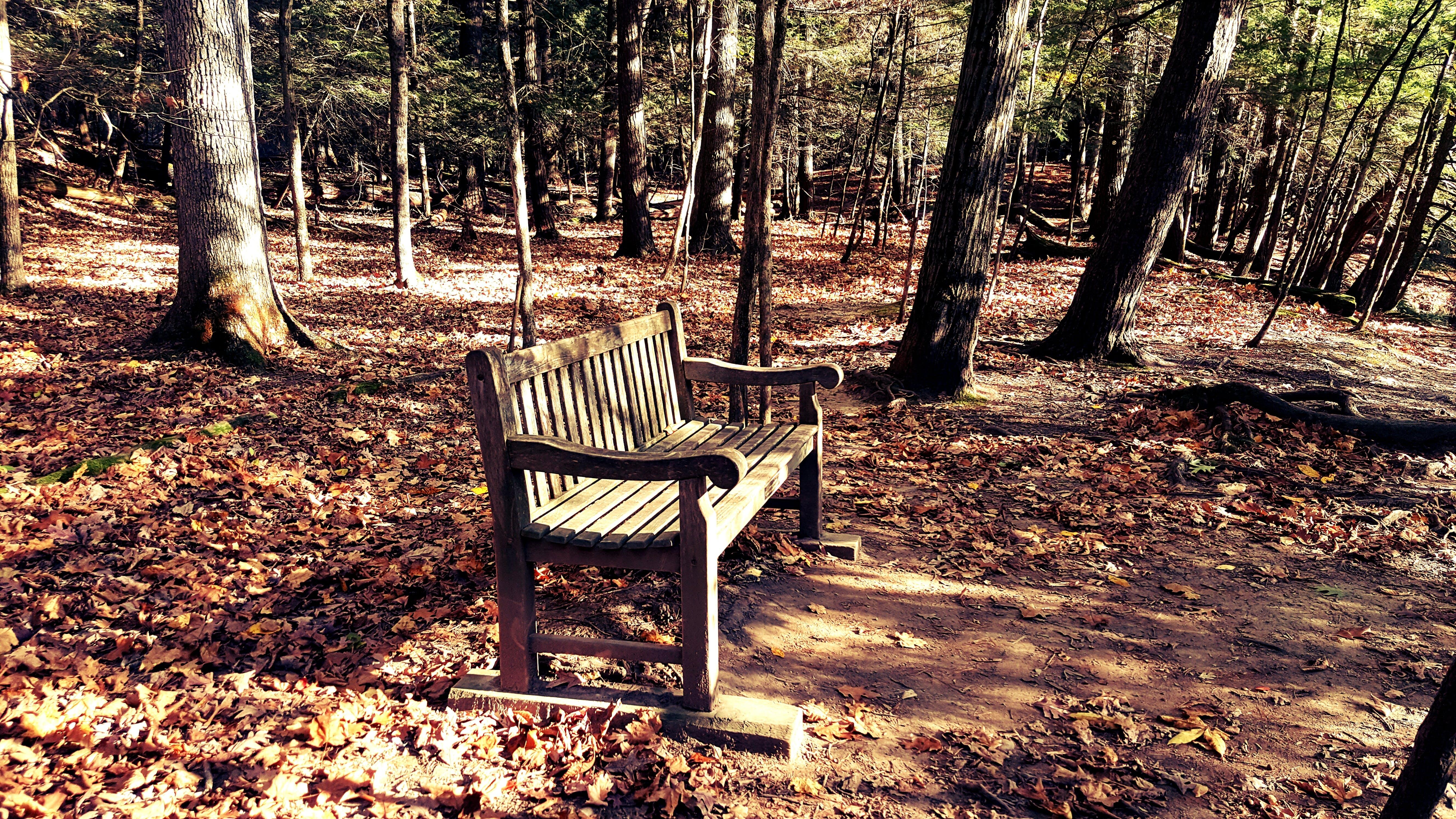 公園, 地面, 增長, 天性 的 免費圖庫相片