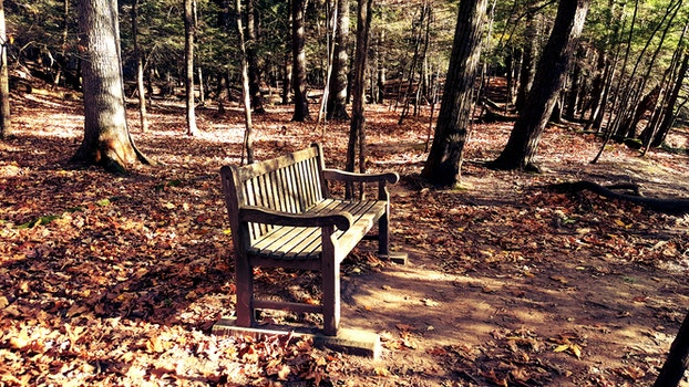 Brown Wooden Bench in the Middle of Forest