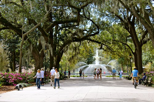Free stock photo of georgia, park, savannah