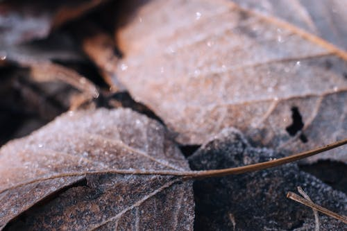 Free stock photo of frost, frosted leaves, sparkle