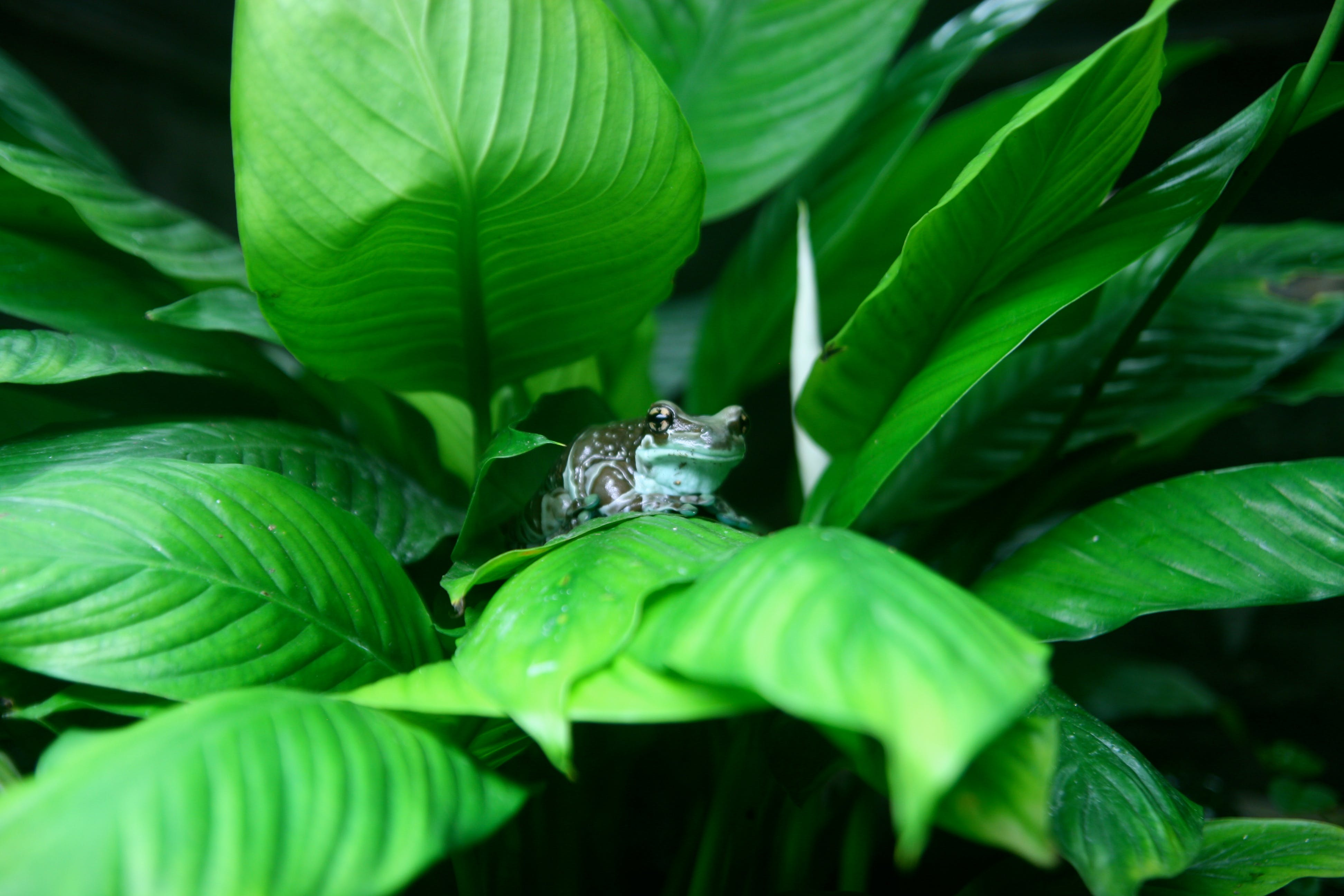 Brown and White Frog on Green Leafed Plant