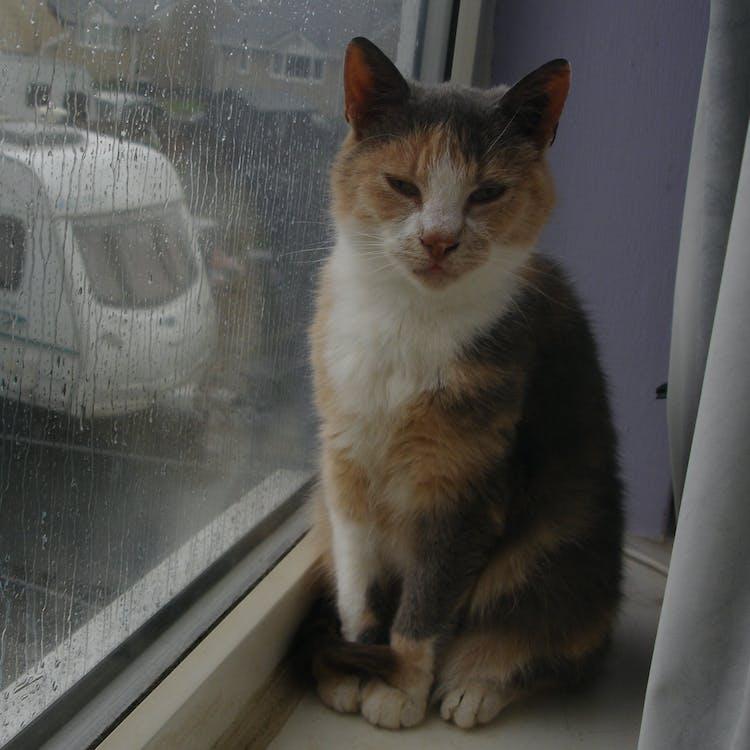 Free stock photo of cat, cat rainy day, cats