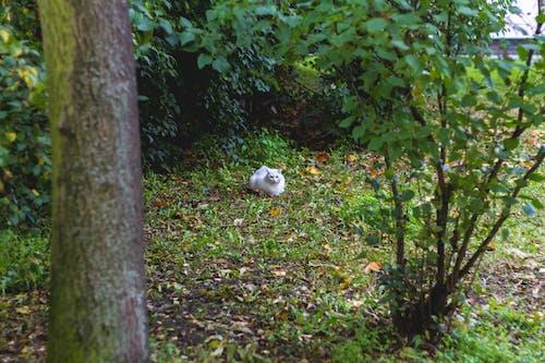 Photos gratuites de chat, chat blanc, courir, être assis