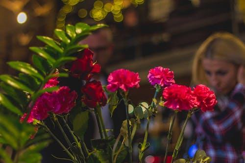 格力, 植物, 花, 跑步 的 免费素材照片