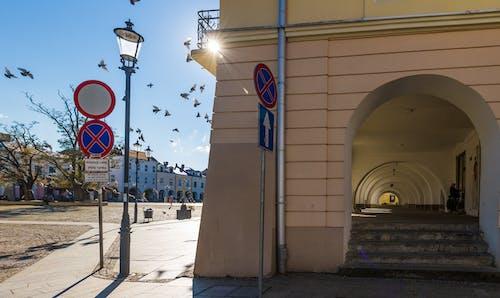 güvercinler, krosno, Market, podkarpackie içeren Ücretsiz stok fotoğraf