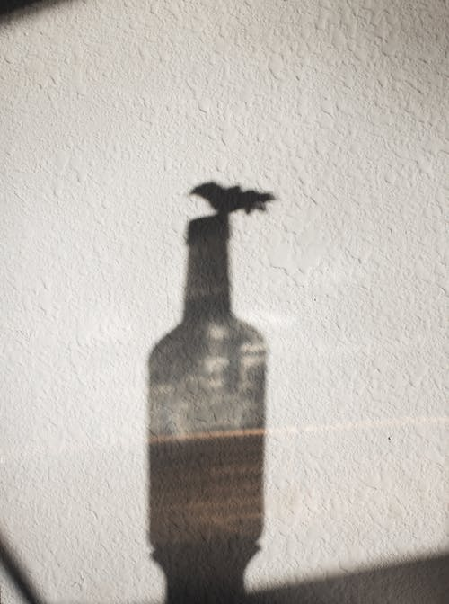 Shadow of glass bottle on white wall in daylight