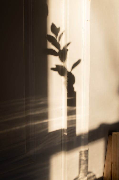 Shadow on white wall of stem with leaves in glass vase in sunlight