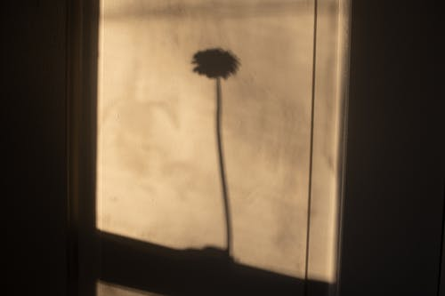 Tender shadow of delicate blooming flower on wall in bright sunlight in daytime