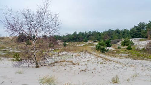 Photos gratuites de arbres, côte, dunes, hel
