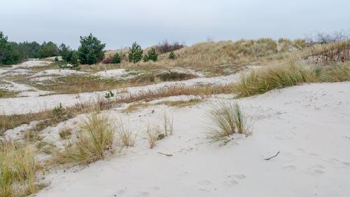 ağaçlar, deniz kıyısı, hel, kum tepecikleri içeren Ücretsiz stok fotoğraf