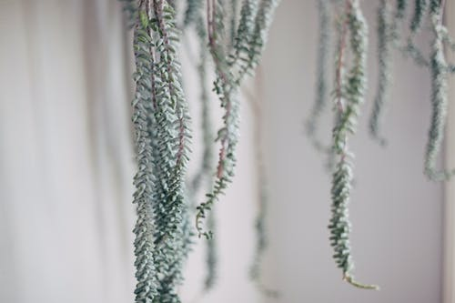 Free stock photo of darling, fern, folk, plant