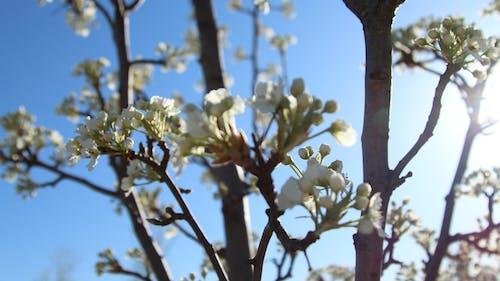 Darmowe zdjęcie z galerii z drzewa, flara obiektywu, kwiaty, niebieski