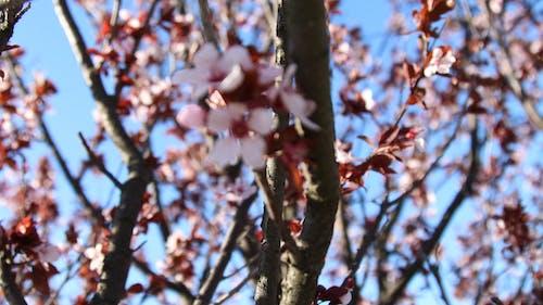 Darmowe zdjęcie z galerii z czerwony, drzewa, kwiaty, niebieski