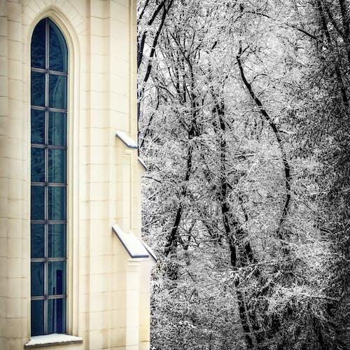 Immagine gratuita di alberi, architettura, chiesa, congelato