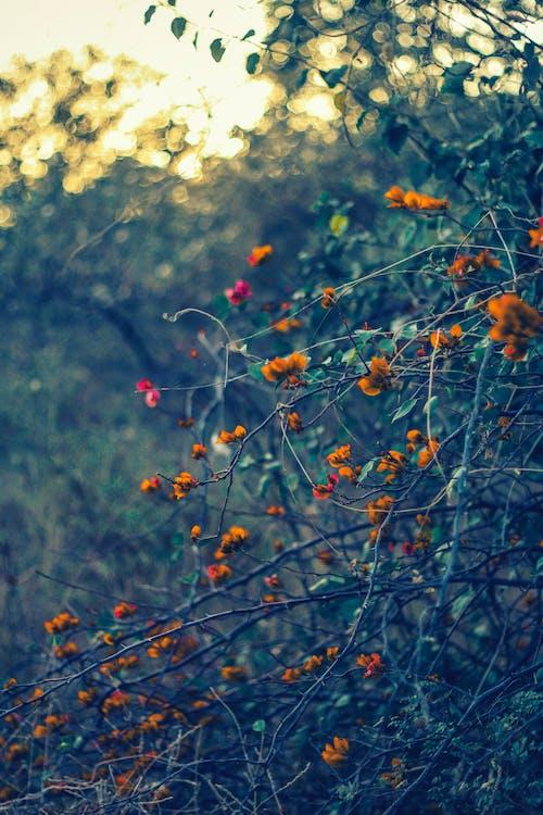 Foto profissional grátis de floresta no outono