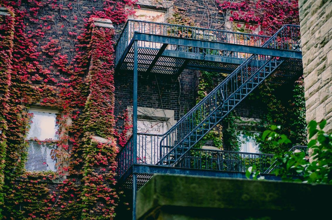 Blue Metal Ladder
