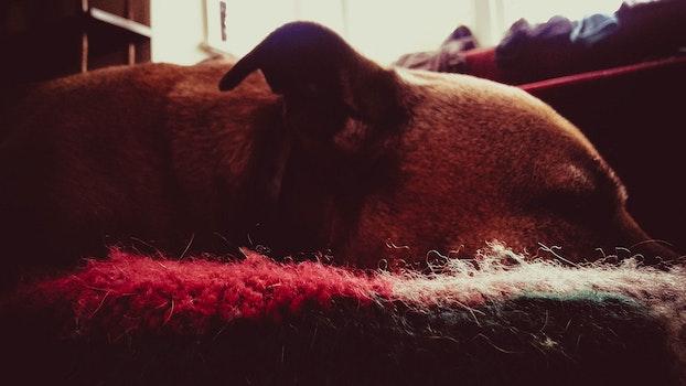 Dog on Area Mat