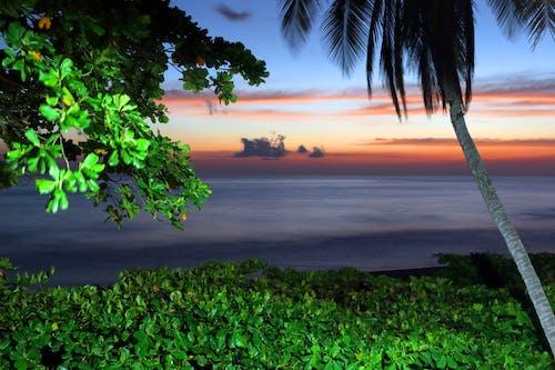 Free stock photo of costa rica, nature, pacific