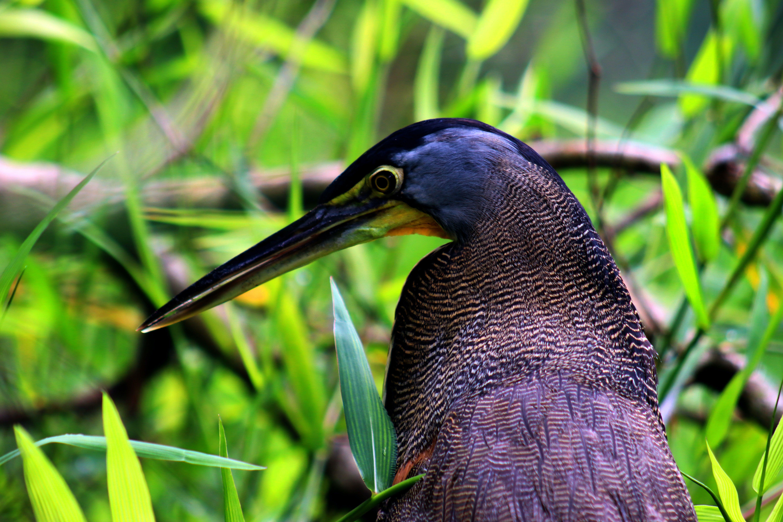 Blue and Black Bird on Grass