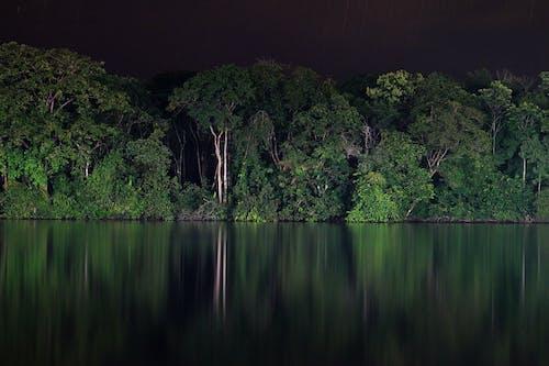 doğa, karayipli, kosta rika, mangrov bataklığı içeren Ücretsiz stok fotoğraf
