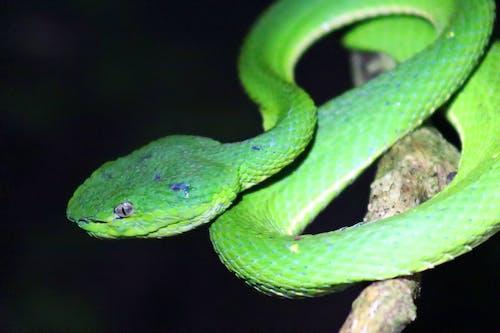 哥斯達黎加, 天性, 蛇, 野生動物 的 免費圖庫相片