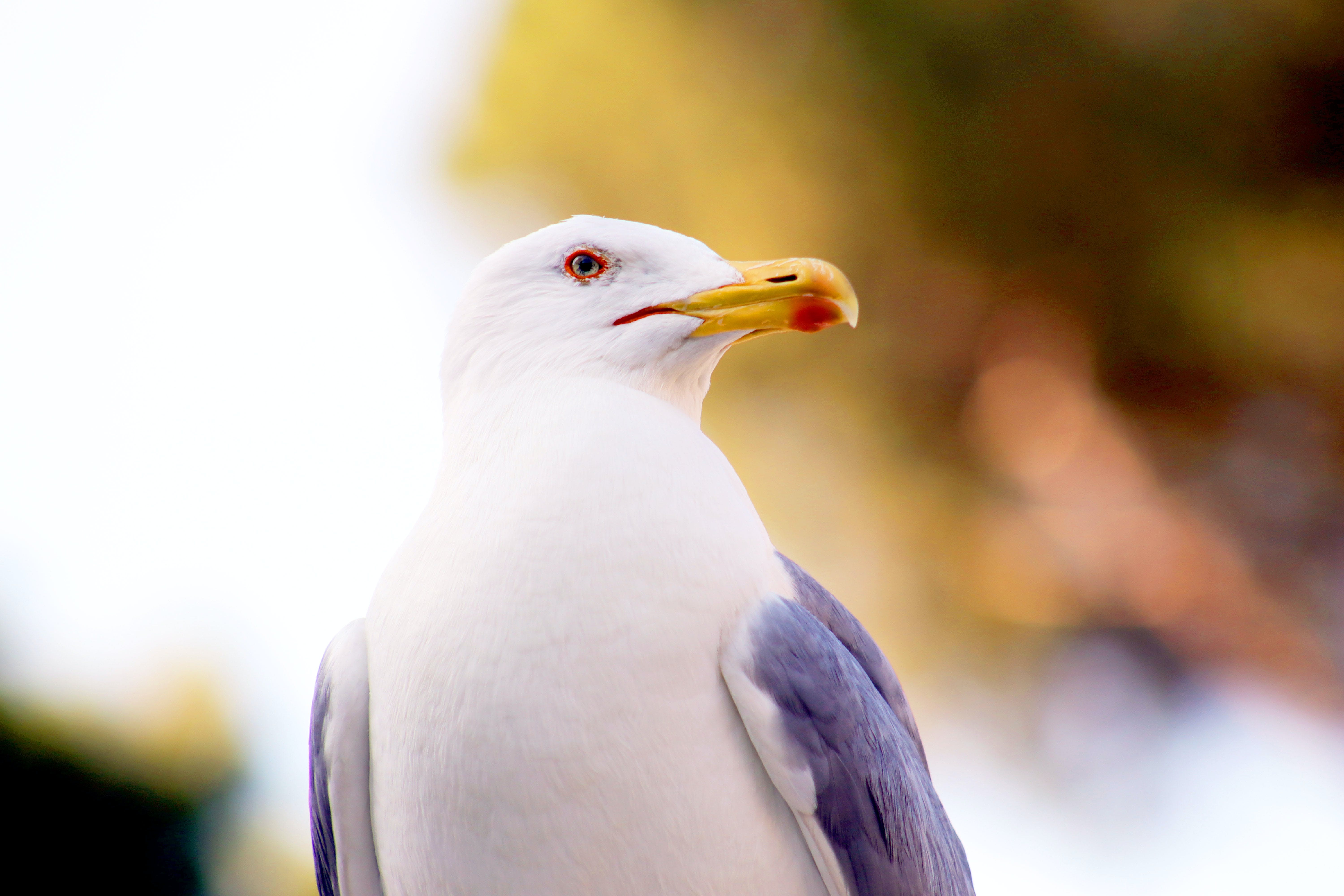 Micro Photography of White and Grey Bird