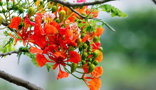 Imagine de stoc gratuită din crengi, creștere, culori, estompare