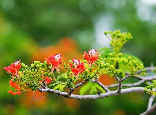 Kostnadsfri bild av anläggning, blommor, blomning, flora