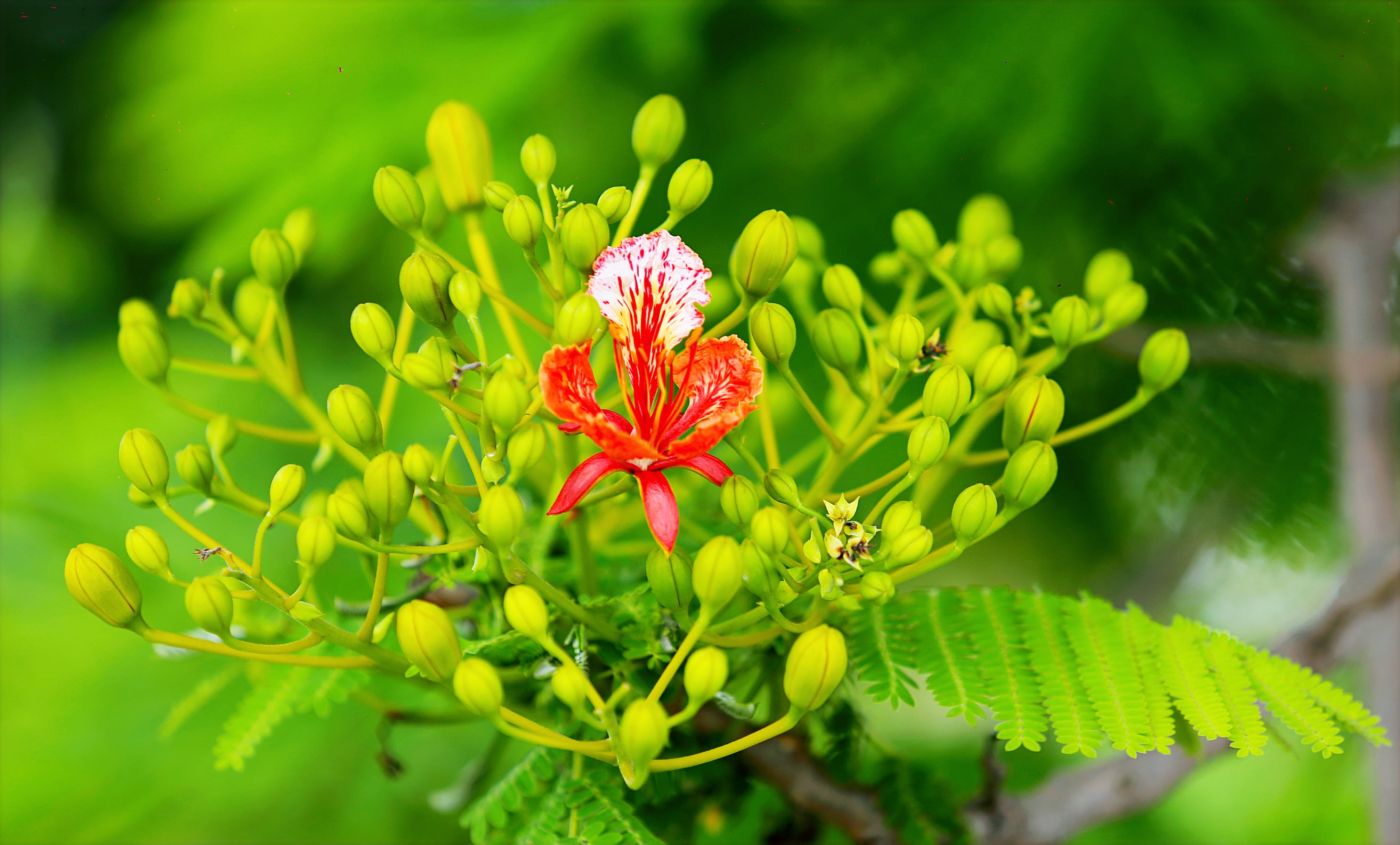 Selectorized Photography of Red Petaled Plant