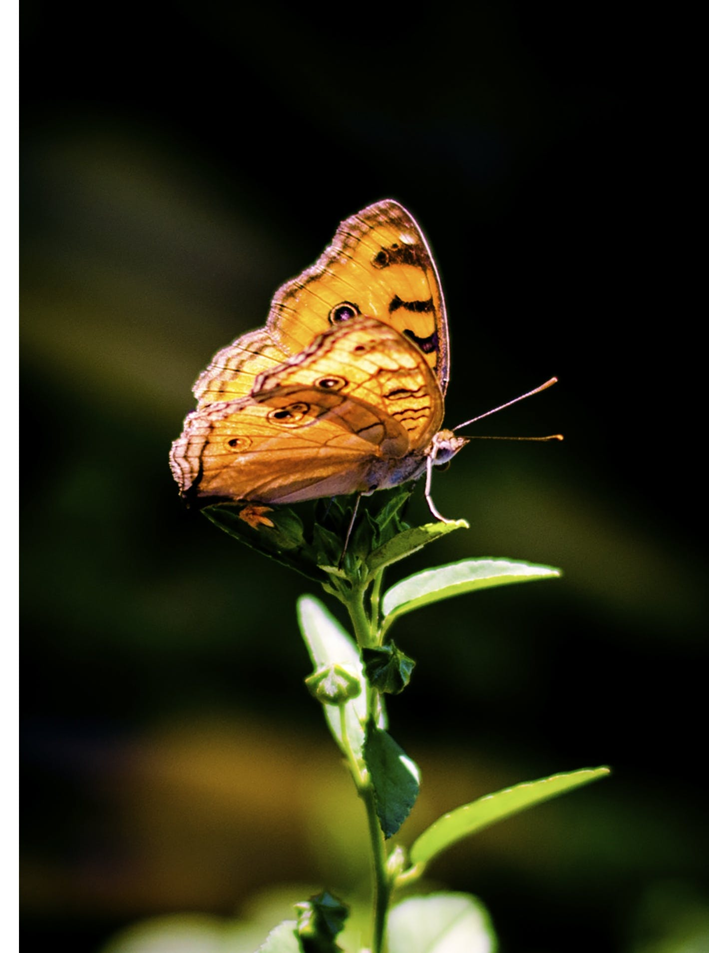 Brown and Gray Butterfly Perching on Plant