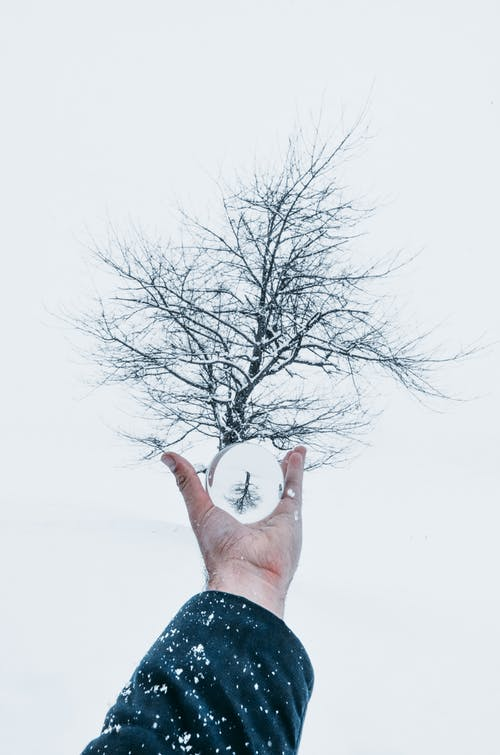Crop anonymous male with outstretched hand holding magnifier against leafless tree under snowfall in misty winter day