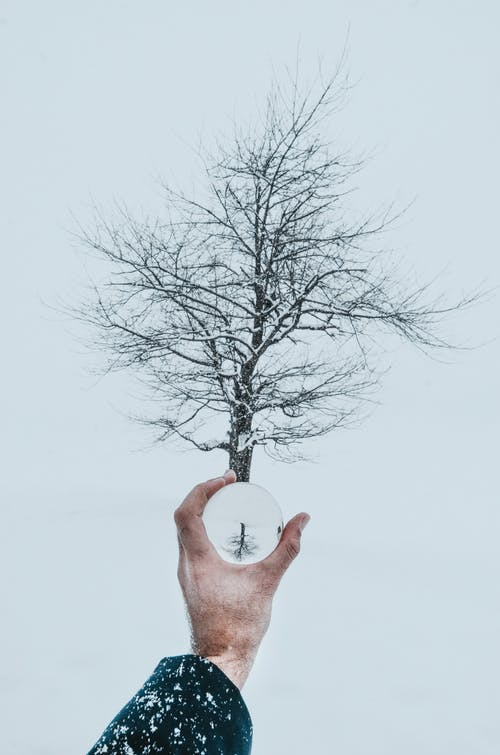 Man with magnifier against tree with bare branches