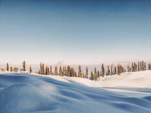 Kostenloses Stock Foto zu ast, baum, blauer himmel