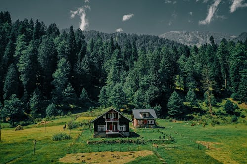 Wooden residential houses located on grassy field near lush coniferous woods with green tall trees in rural area in countryside