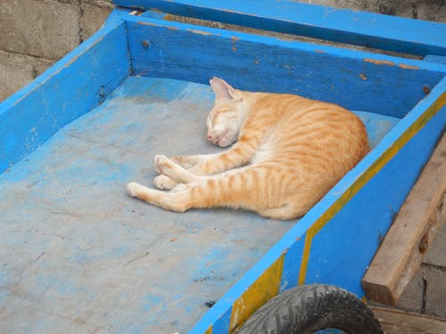 Free stock photo of animals, sleeping