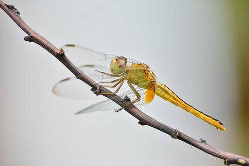 Green Dragonfly on Brown Tree Branch