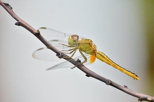 คลังภาพถ่ายฟรี ของ กลางวัน, ชีววิทยา, ติด, ธรรมชาติ