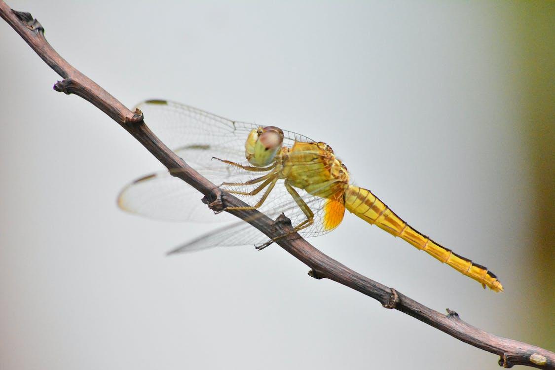 beest, biologie, close-up