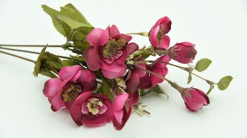 Бесплатное стоковое фото с цветочный реквизит