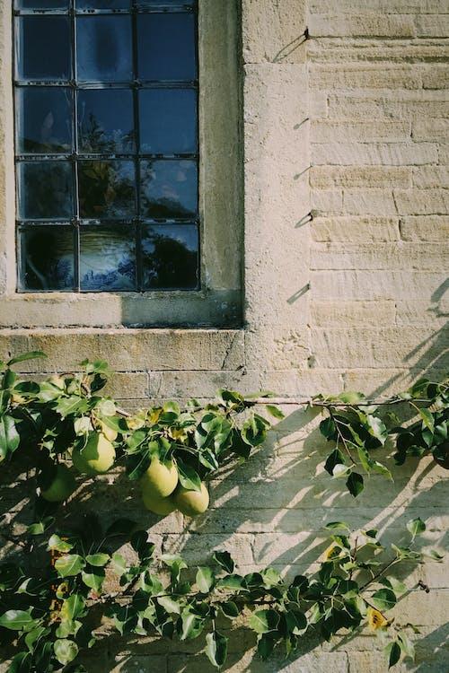 Бесплатное стоковое фото с архитектура, величественный дом, груша