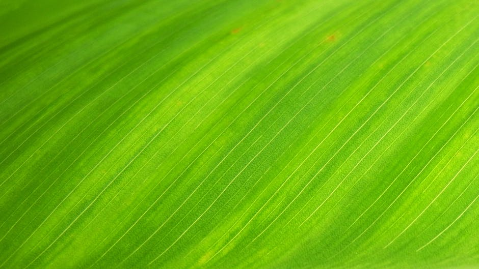 Natural wallpaper green leaf royalty free