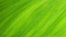 nature, plant, leaf
