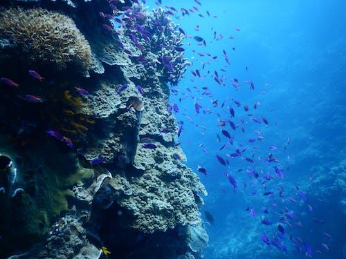 Free stock photo of animals, coral, sea